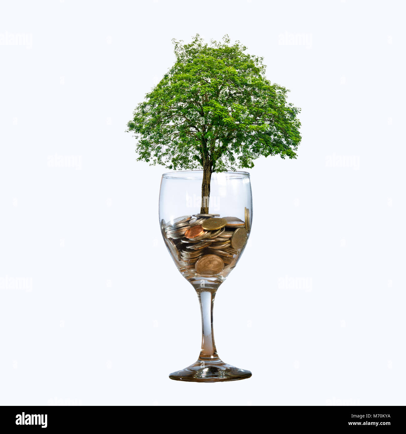 tree Coin glass Isolate hand Coin tree The tree grows on the pile. Saving money for the future. Investment Ideas - Stock Image
