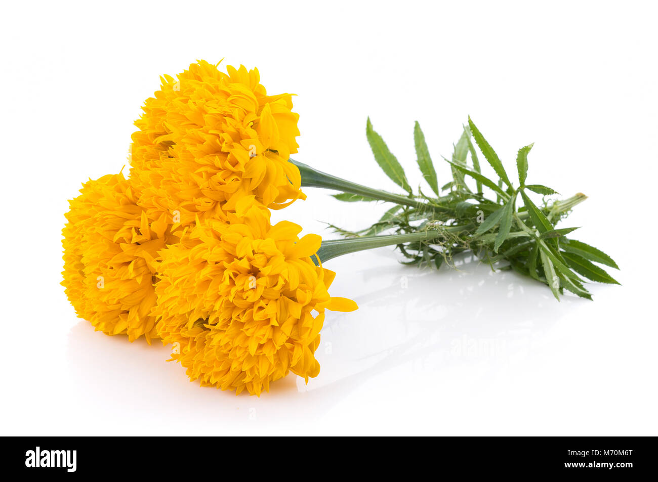 Marigold Flowers On White Background Stock Photo 176422144 Alamy