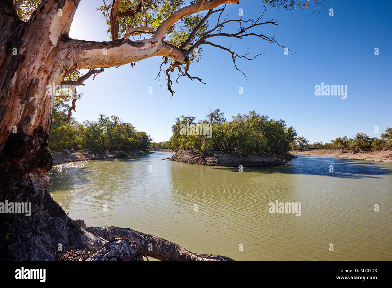 Early morning, Darling River near small outback town of Menindee, Nerw South Wales, Australia - Stock Image