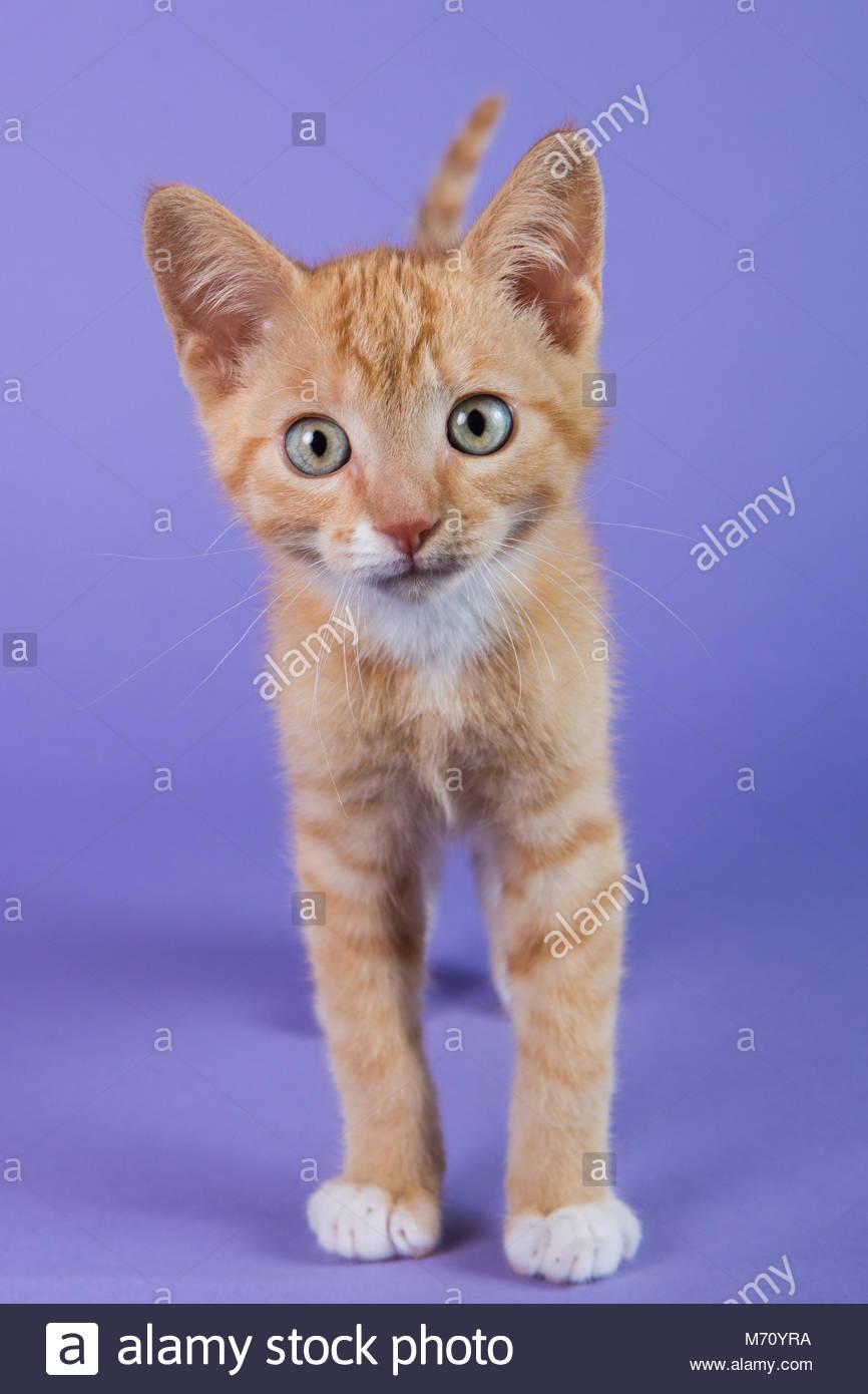 Cat Against Green Background Stock Photos Amp Cat Against