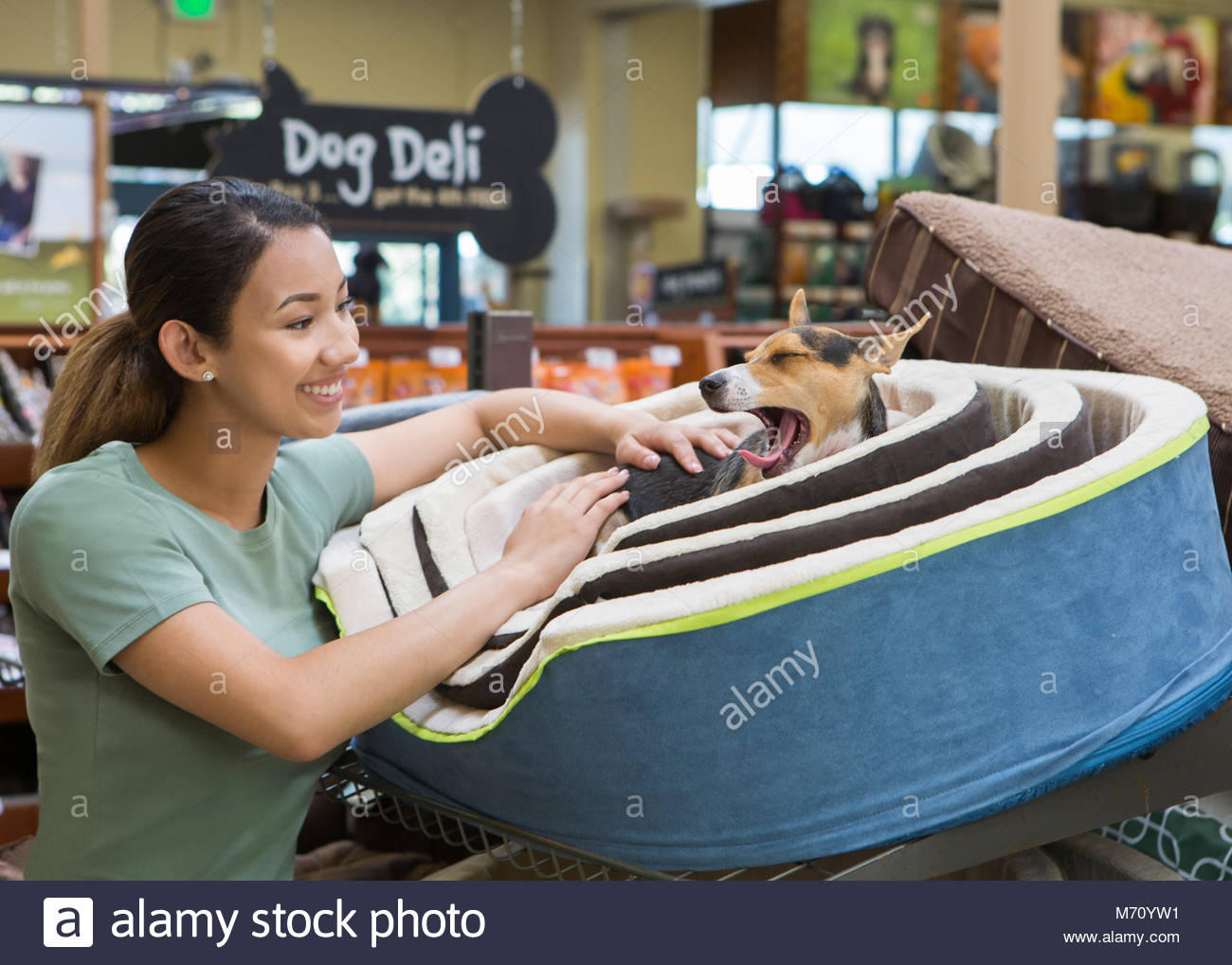 Young asian woman looking at small terrier dog yawning in dog bed in a pet store - Stock Image