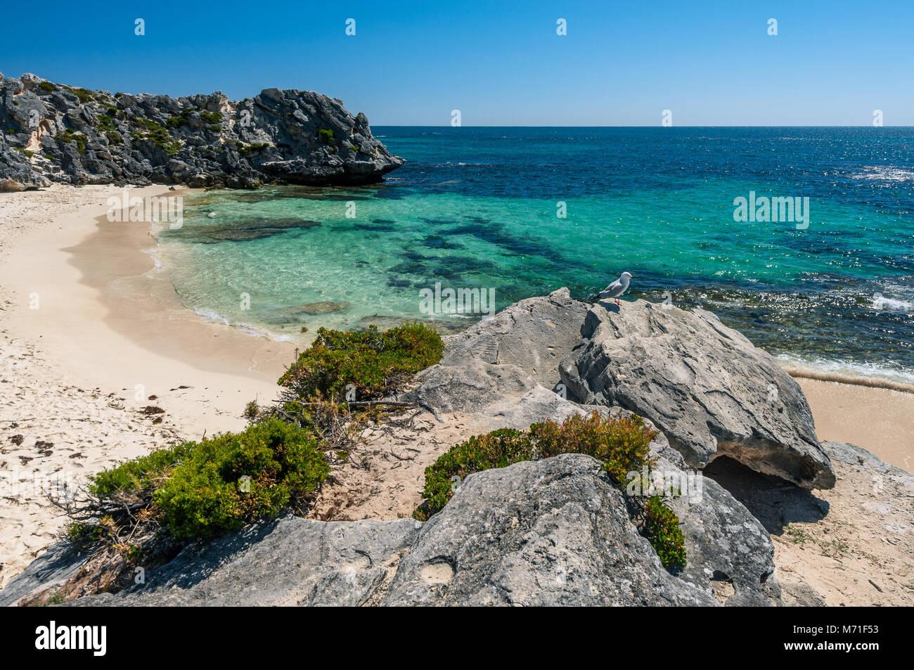 Little Parakeet Bay on Rottnest Island. - Stock Image