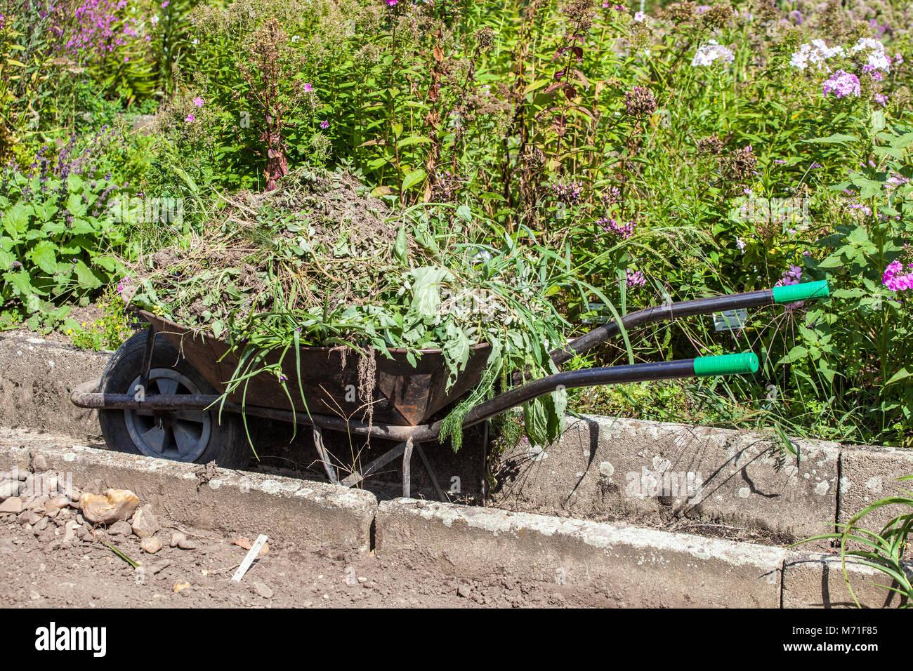 Wheelbarrow full of weeds, garden weeding Stock Photo ...