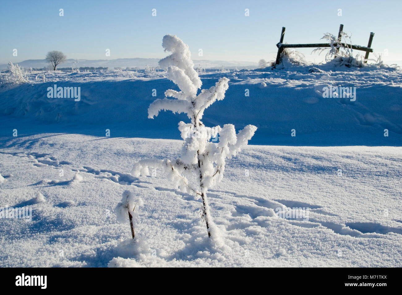 Snow covered farmland in the west Lancashire village of Rufford, Christmas Eve, 2010 - Stock Image