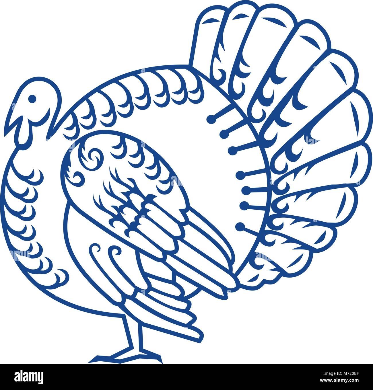 Turkey Large Bird In Meleagris Stock Photos & Turkey Large Bird In ...