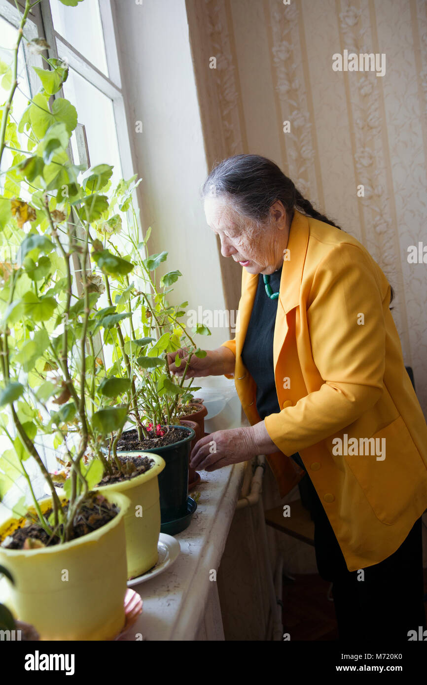 Elderly woman at the window with flowers - Stock Image