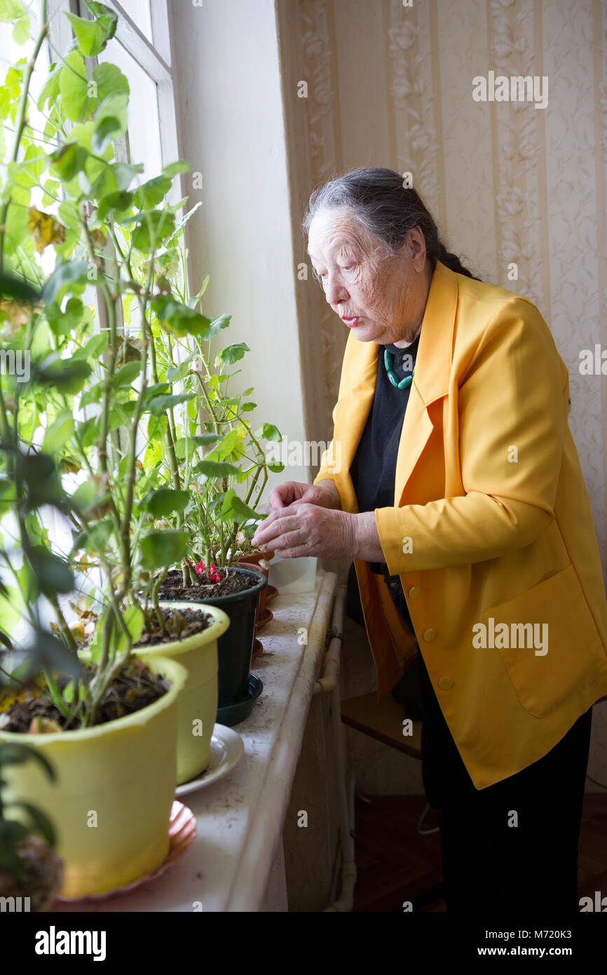 Elderly woman in the yellow jacket at the window with flowers - Stock Image