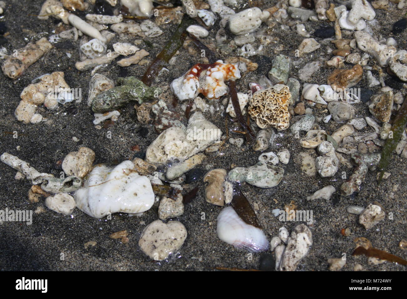 Sea shells at the beach - Stock Image