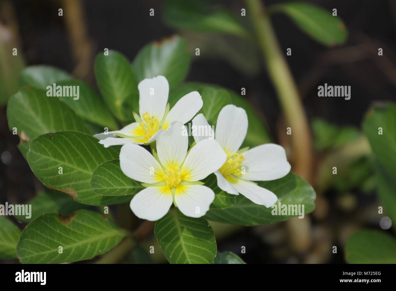 White yellow tropical flowers stock photos white yellow tropical beautiful white yellow tropical flowers stock image mightylinksfo