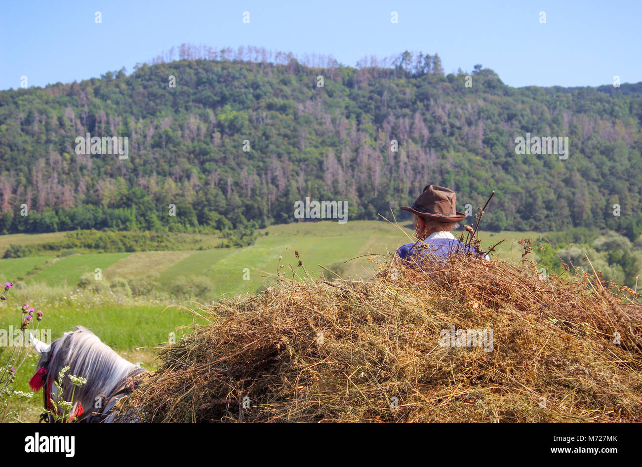 Carrying Hay on Carriot, Traditional Farming - Stock Image
