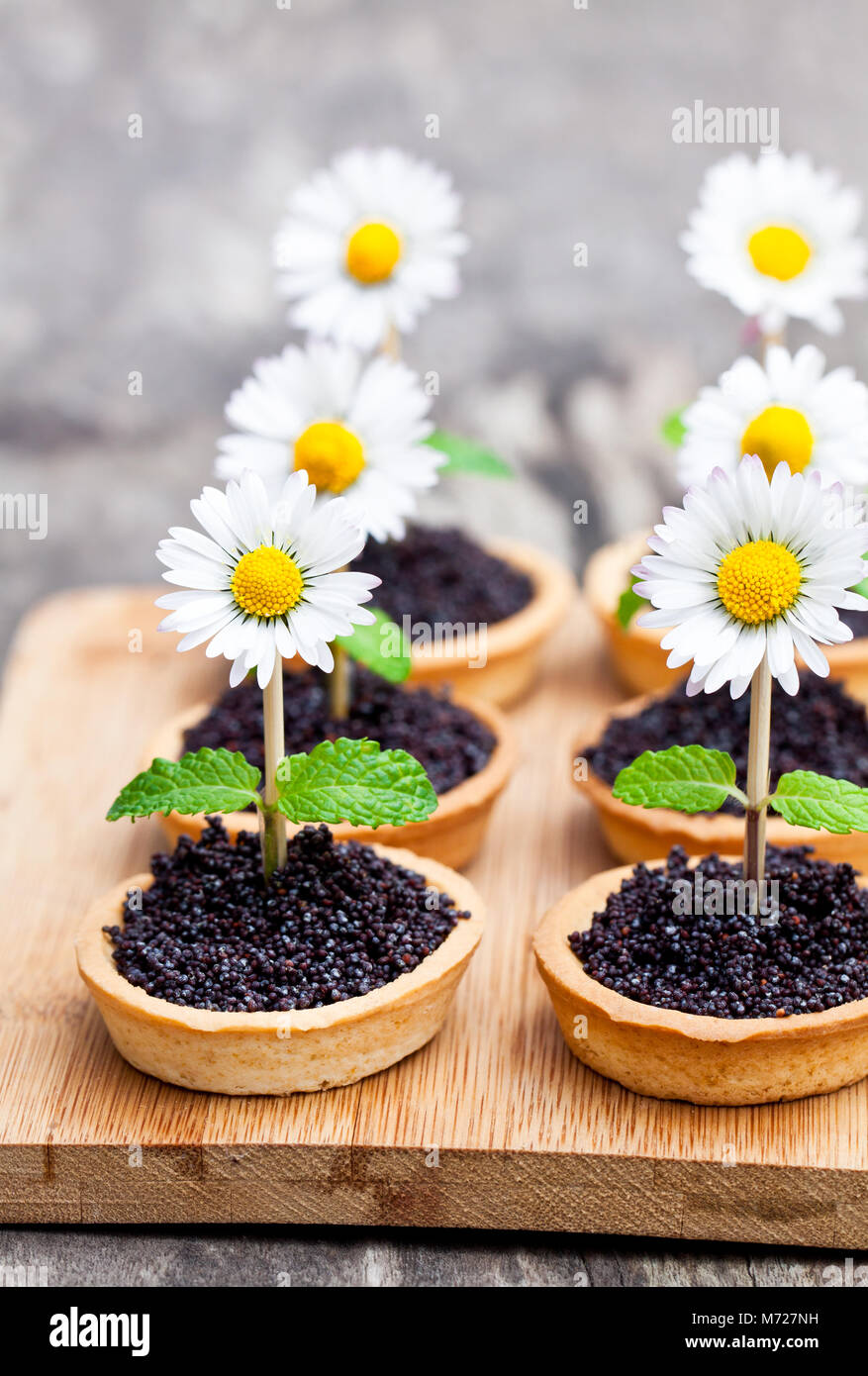 Homemade  chocolate caramel tartlets with poppy seeds and sugar. Creative garnish with real daisy and mint leaves. - Stock Image