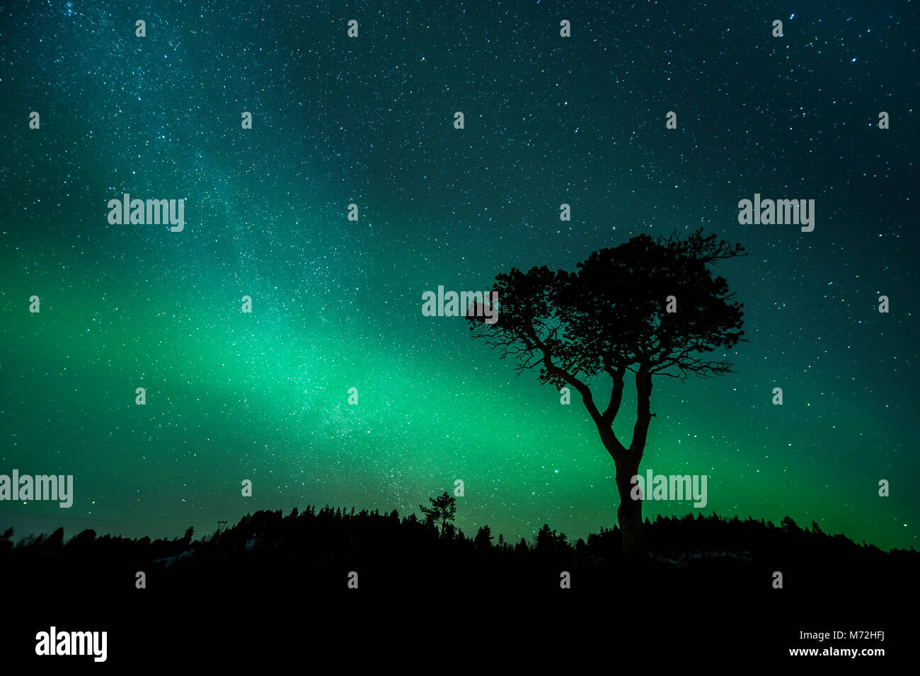 Milky way and a Pinetree - Stock Image