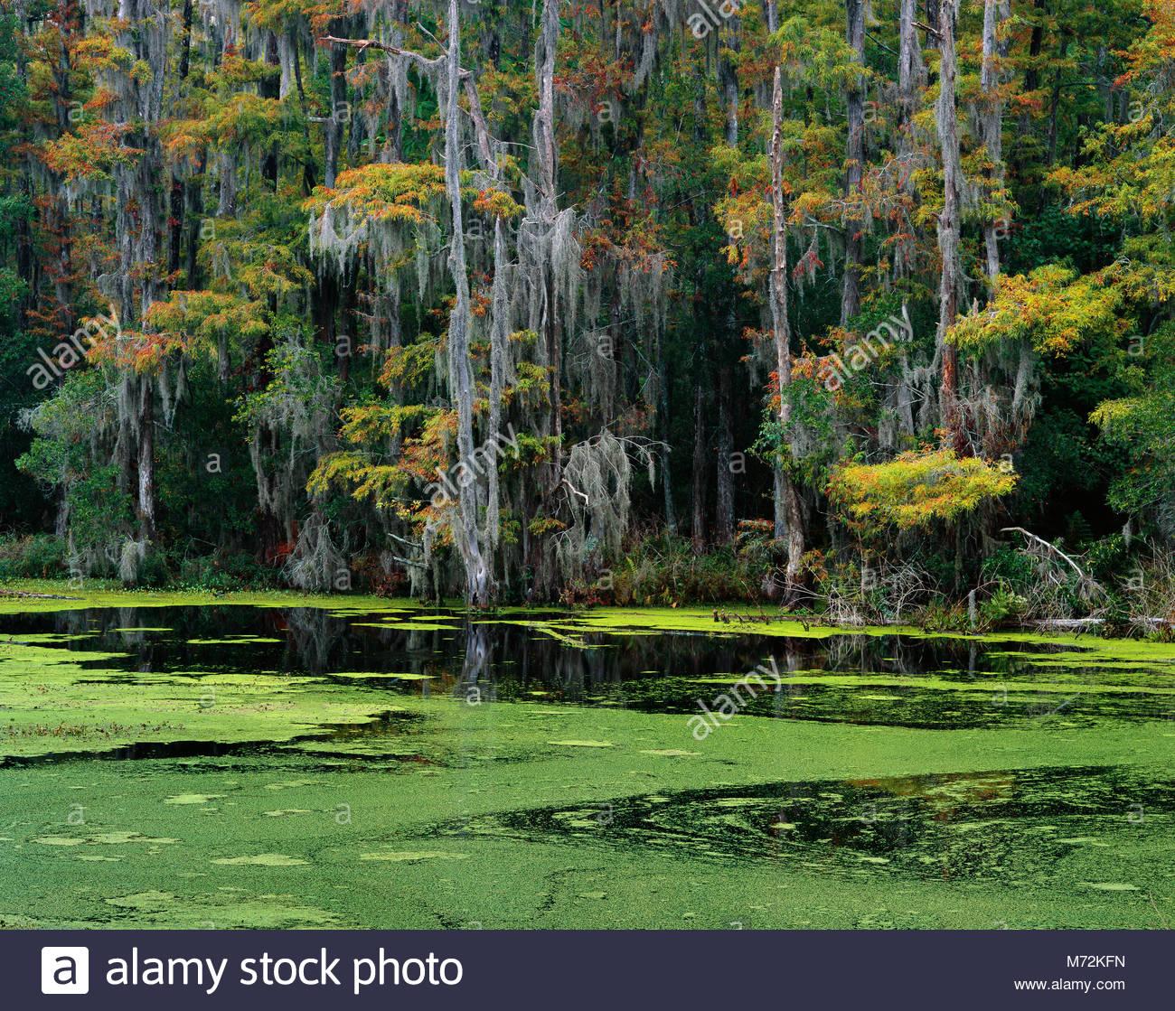 Washoe River, Nature Conservancy Santee Coastal Reserve, McLellanville, South Carolina - Stock Image