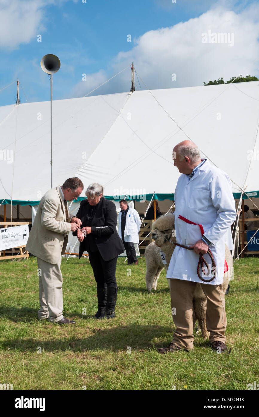 The 2016 County Show at Bywell, Northumberland, England - Stock Image