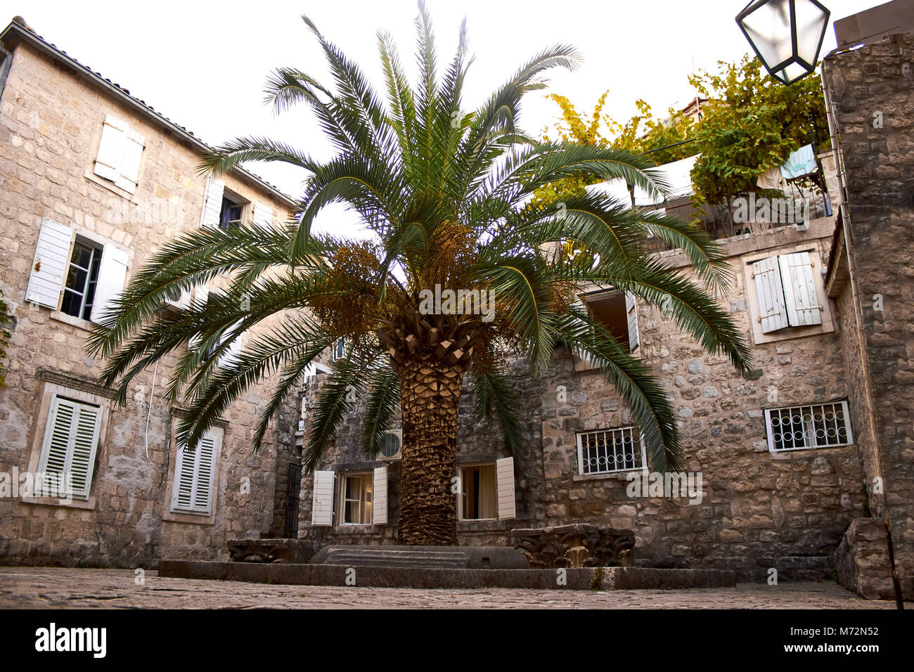 Old Town Budva, Montenegro. We see house and a tall palm - Stock Image