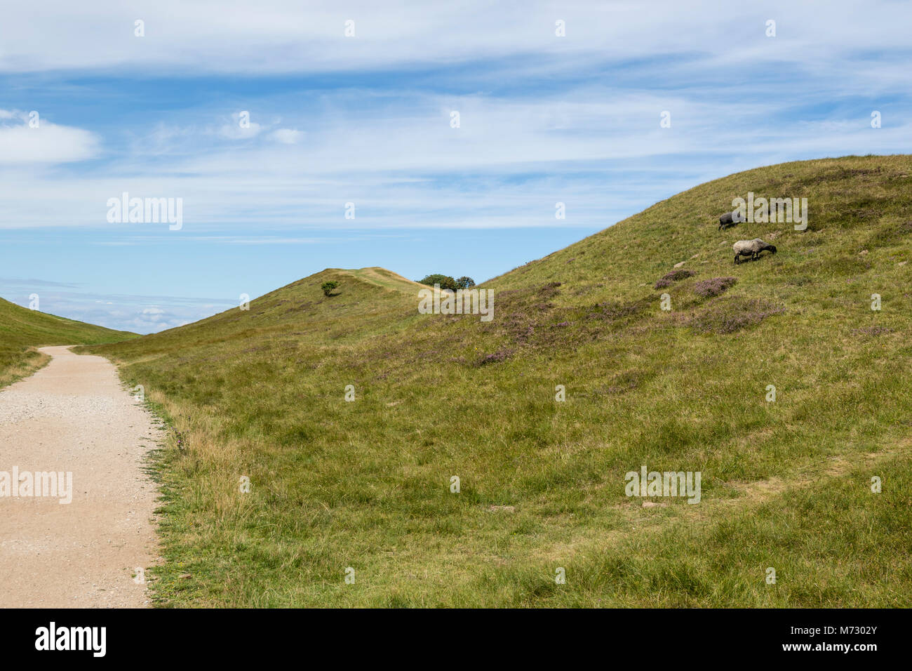 Heather Hill is a protected area, consisting mainly of grassy moraine hills. The area is formed by glacial deposits - Stock Image