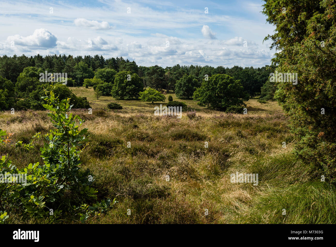 Rusland is a partially protected area designated for EU habitat area. With dry dwarf shrubs, heath, hills and slopes - Stock Image