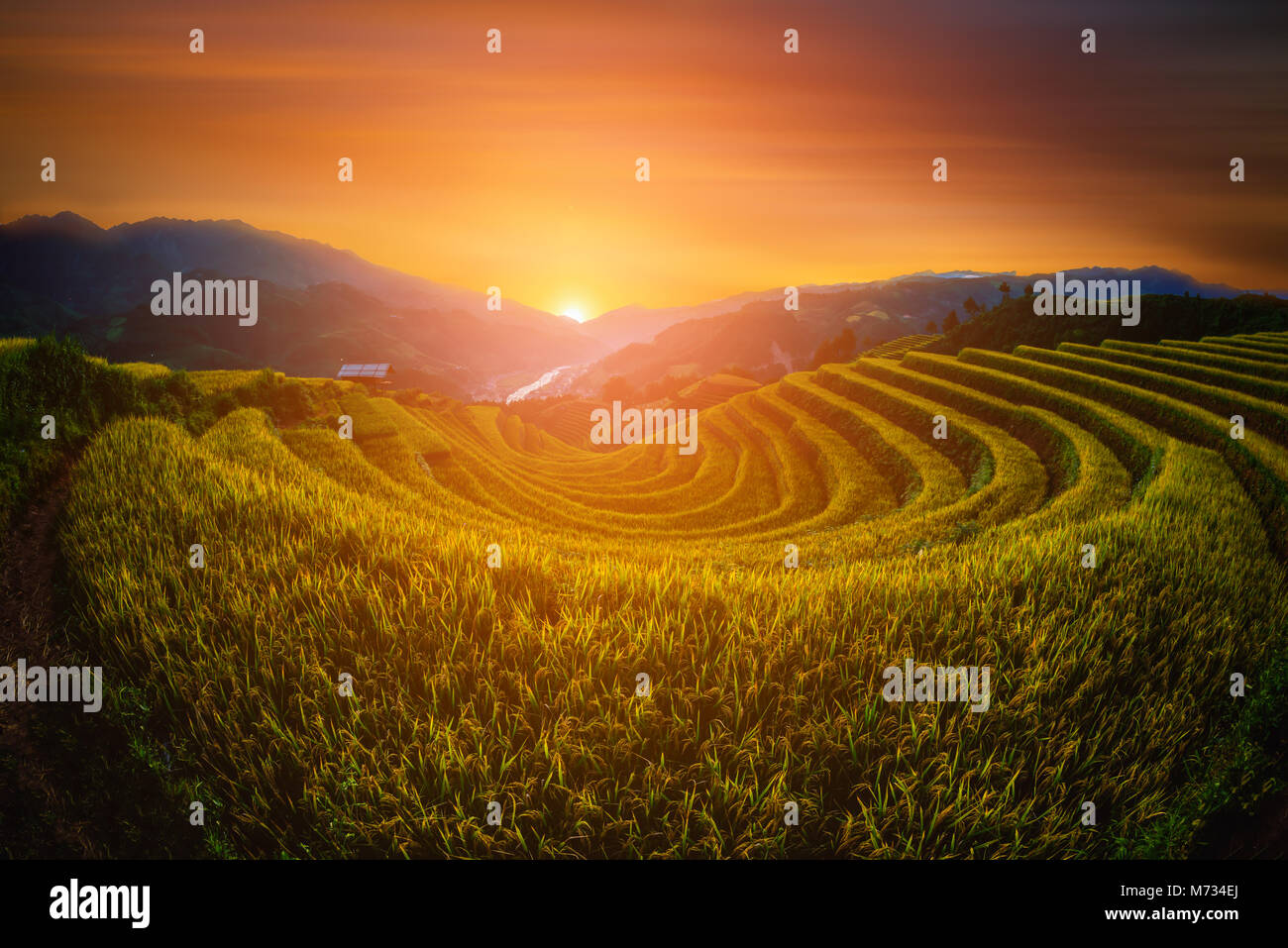 Rice fields on terraced with wooden pavilion at sunset in Mu Cang Chai, YenBai, Vietnam. - Stock Image