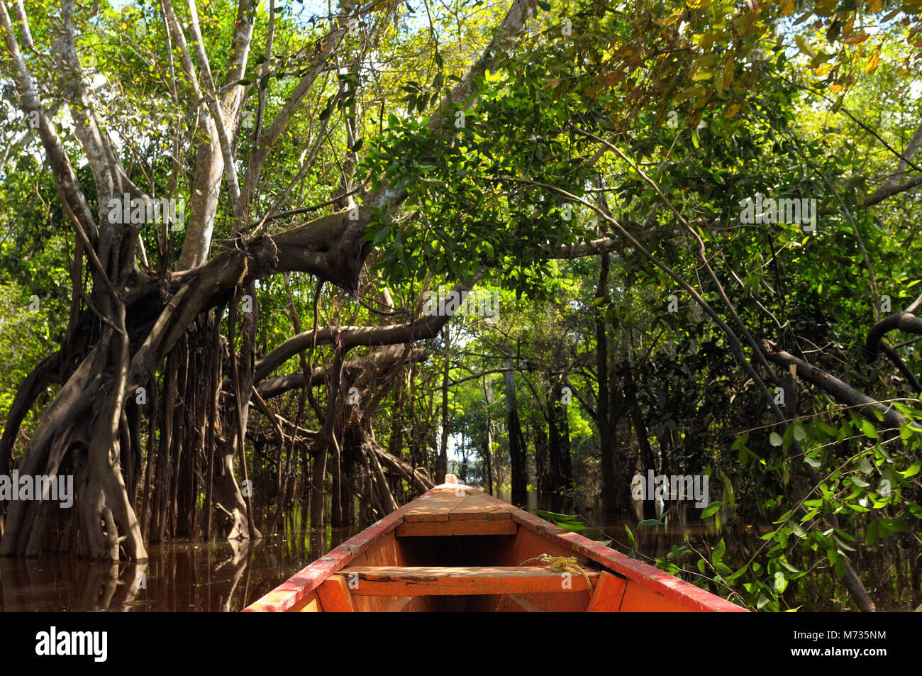 The Amazonian jungle in South America explore on the boat - Stock Image