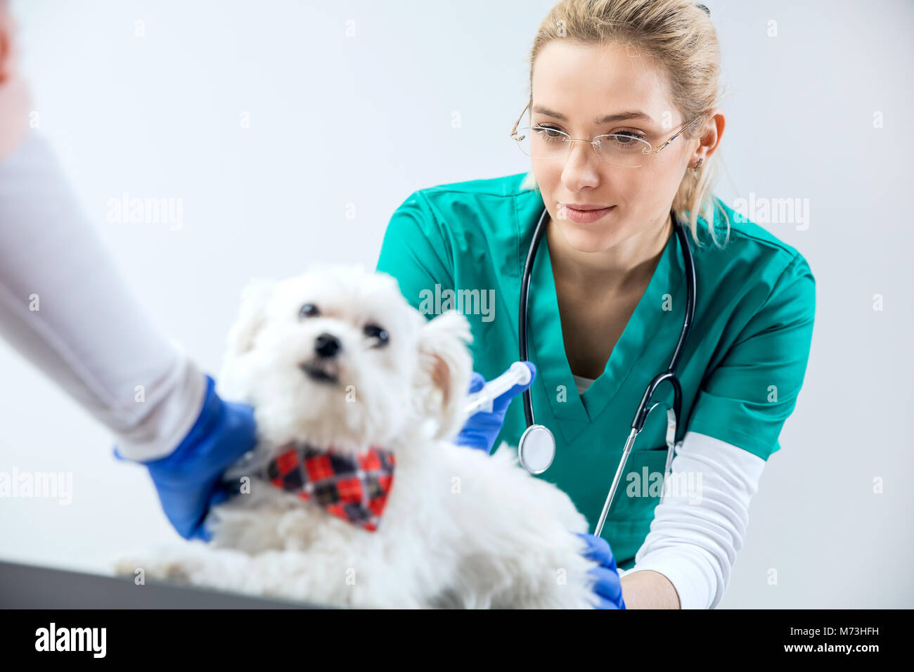 Female vet makes an injection and assistant holds the dog - Stock Image