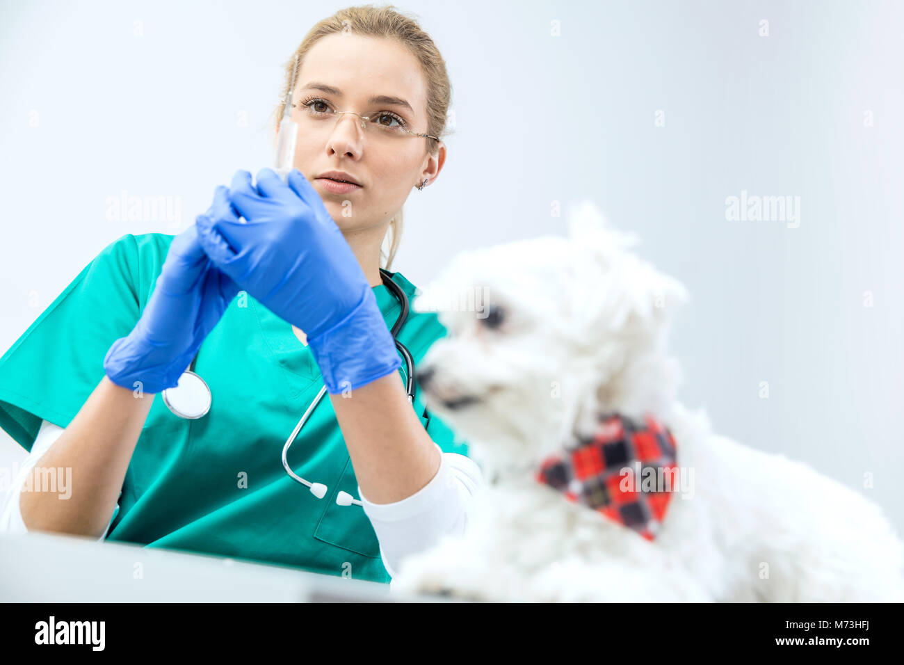 In focused view female vet prepares syringe to vaccinate. Dog awaits. - Stock Image