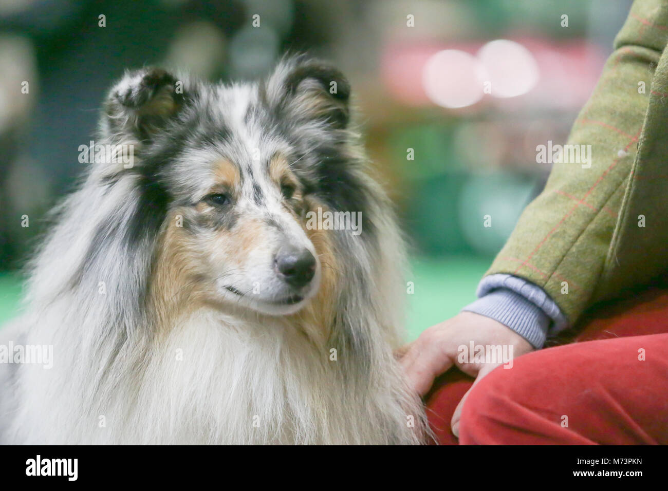 Birmingham, UK. 8th Mar, 2018. On the first day of Crufts, the largest and most famous dog show in the world, a - Stock Image