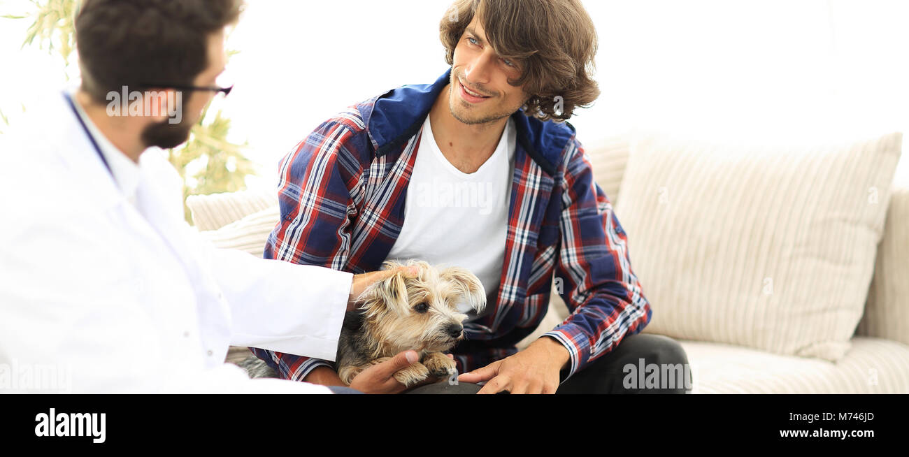 veterinarian conducts an examination of the Yorkshire terrier. - Stock Image