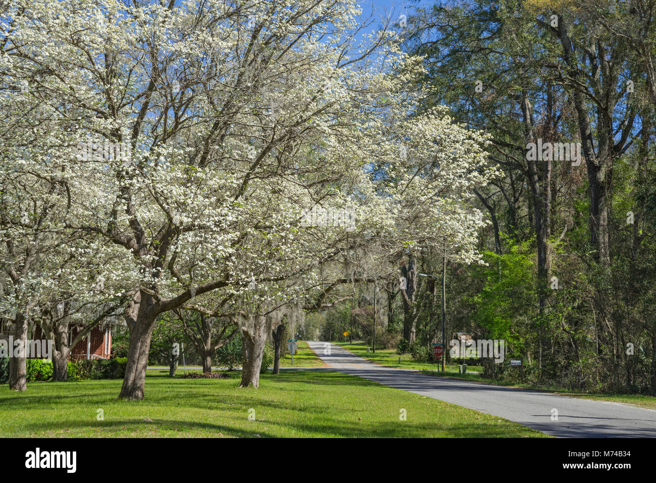 Dogwood Trees Stock Photos & Dogwood Trees Stock Images - Alamy
