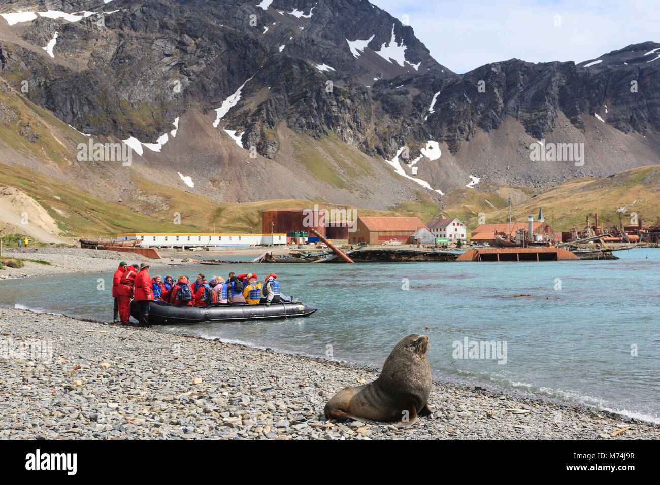 Cruise Eco-tourists arriving by zodiac boat at historic Antarctic whaling station Grytviken Harbor South Georgia, - Stock Image
