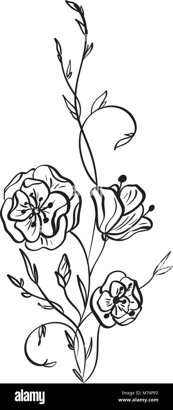 Hand Drawn Wild Rose Flowers Vector Drawing And Sketch With