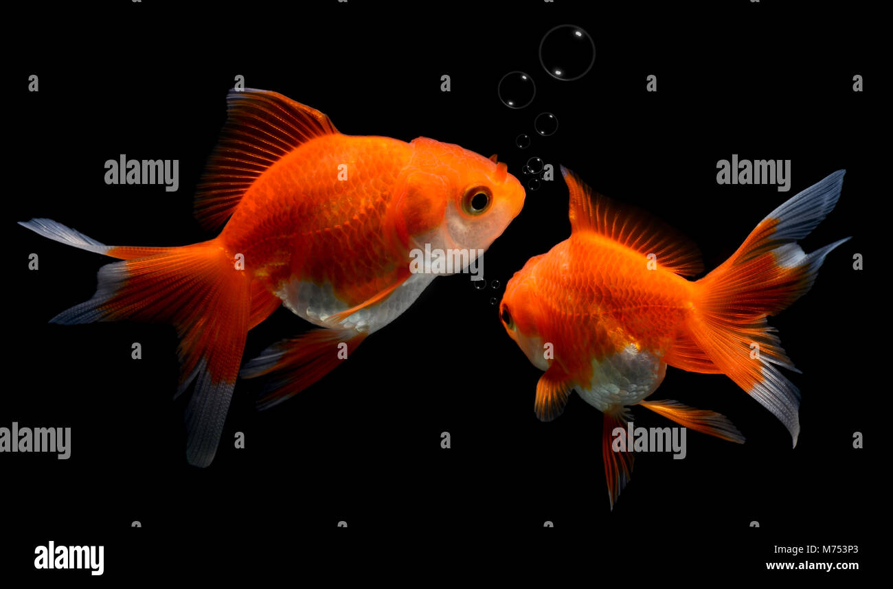 Fish Tank Background Stock Photos & Fish Tank Background Stock ...