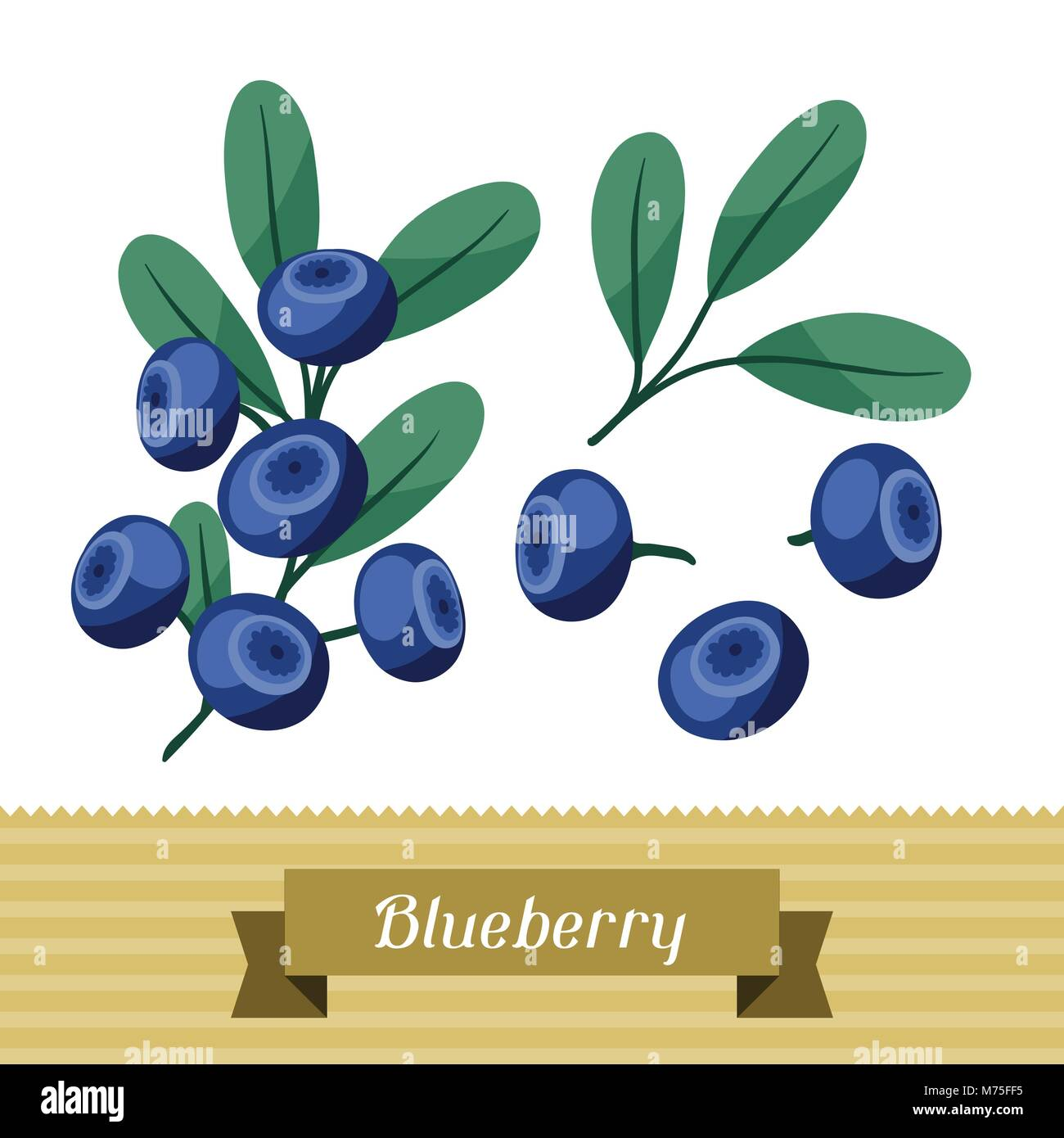 Set of various stylized blueberries. - Stock Vector