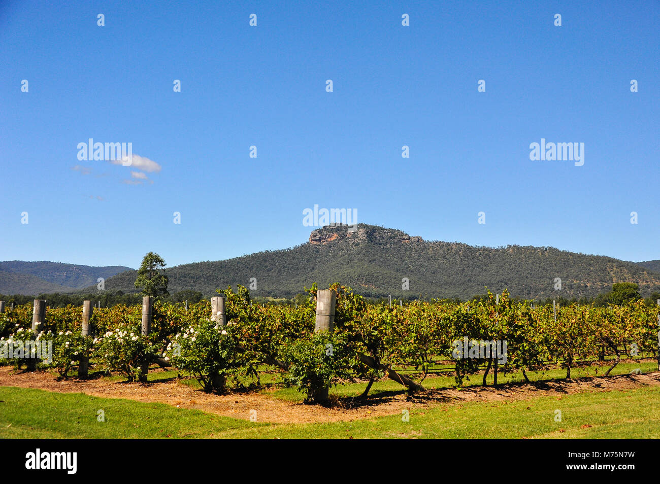 View to Werakata National Park from the Hunter Valley vineyards, Australia. Scenic landscape with mountain background - Stock Image