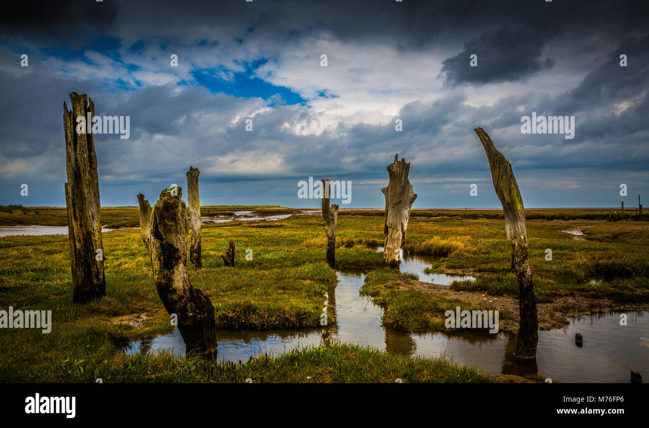Norfolk coast marshland, with stormy sky and ancient timbers rising out of the bog. - Stock Image