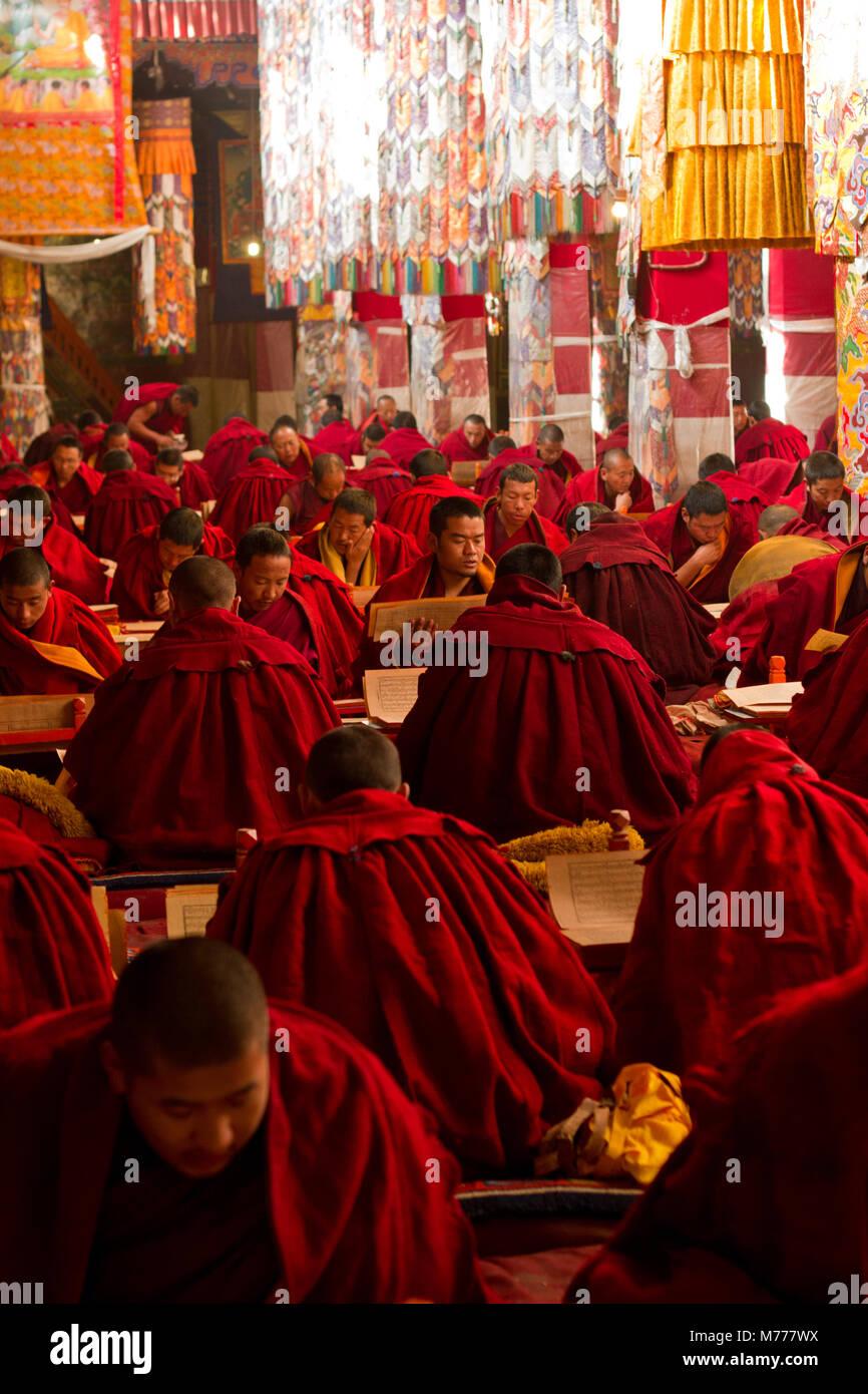 Tibetan Buddhist monks studying Buddhist scripture in Drepung Monastery, Lhasa, Tibet, China, Asia - Stock Image