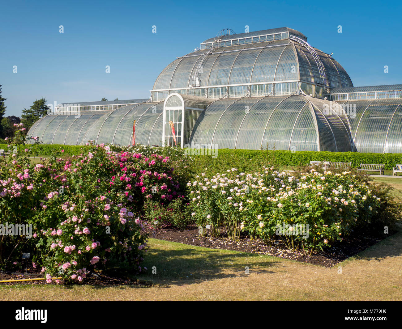 Rose beds and Palm House, Kew Gardens, UNESCO World Heritage Site, Kew, Greater London, England, United Kingdom, - Stock Image