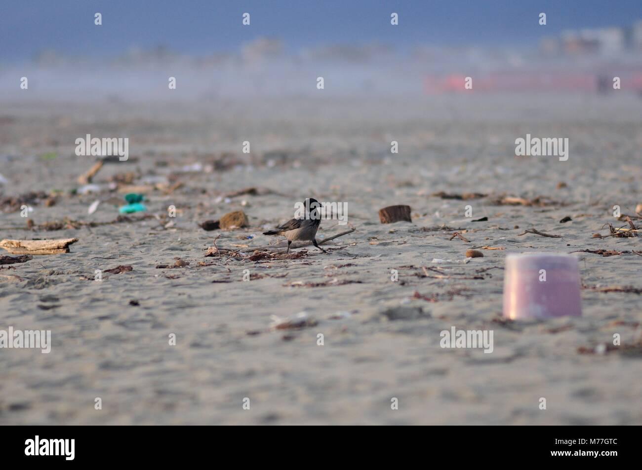 A bird in a dirty beach. - Stock Image