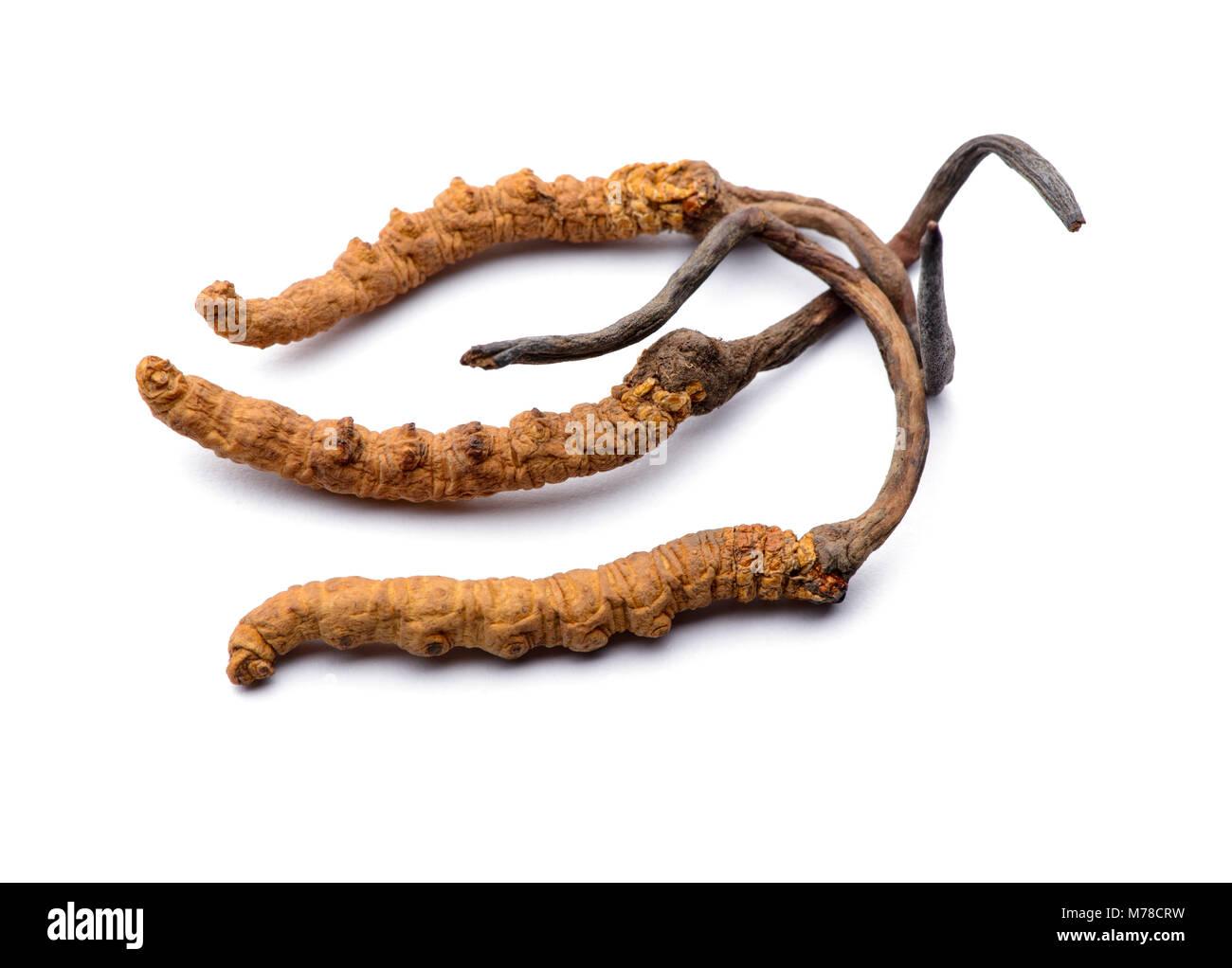 Wild cordyceps sinensis Tibet whole pieces. Isolated on white background. - Stock Image