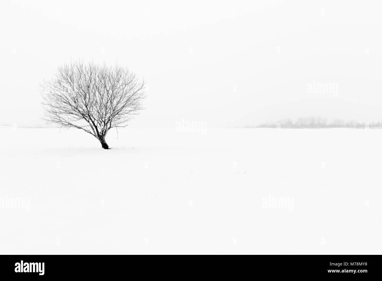 Winter black and white misty landscape minimalist snow scene with lone tree - Stock Image
