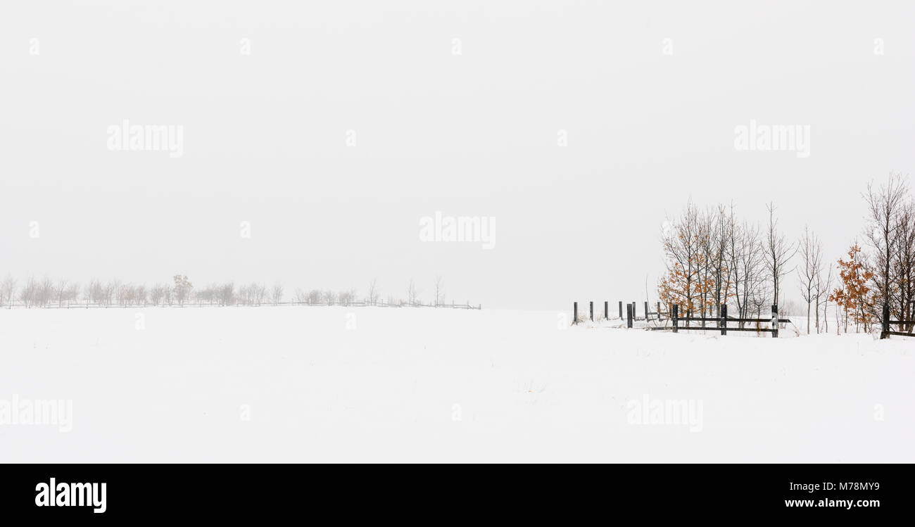 Winter panorama misty landscape minimalist snow scene - Stock Image