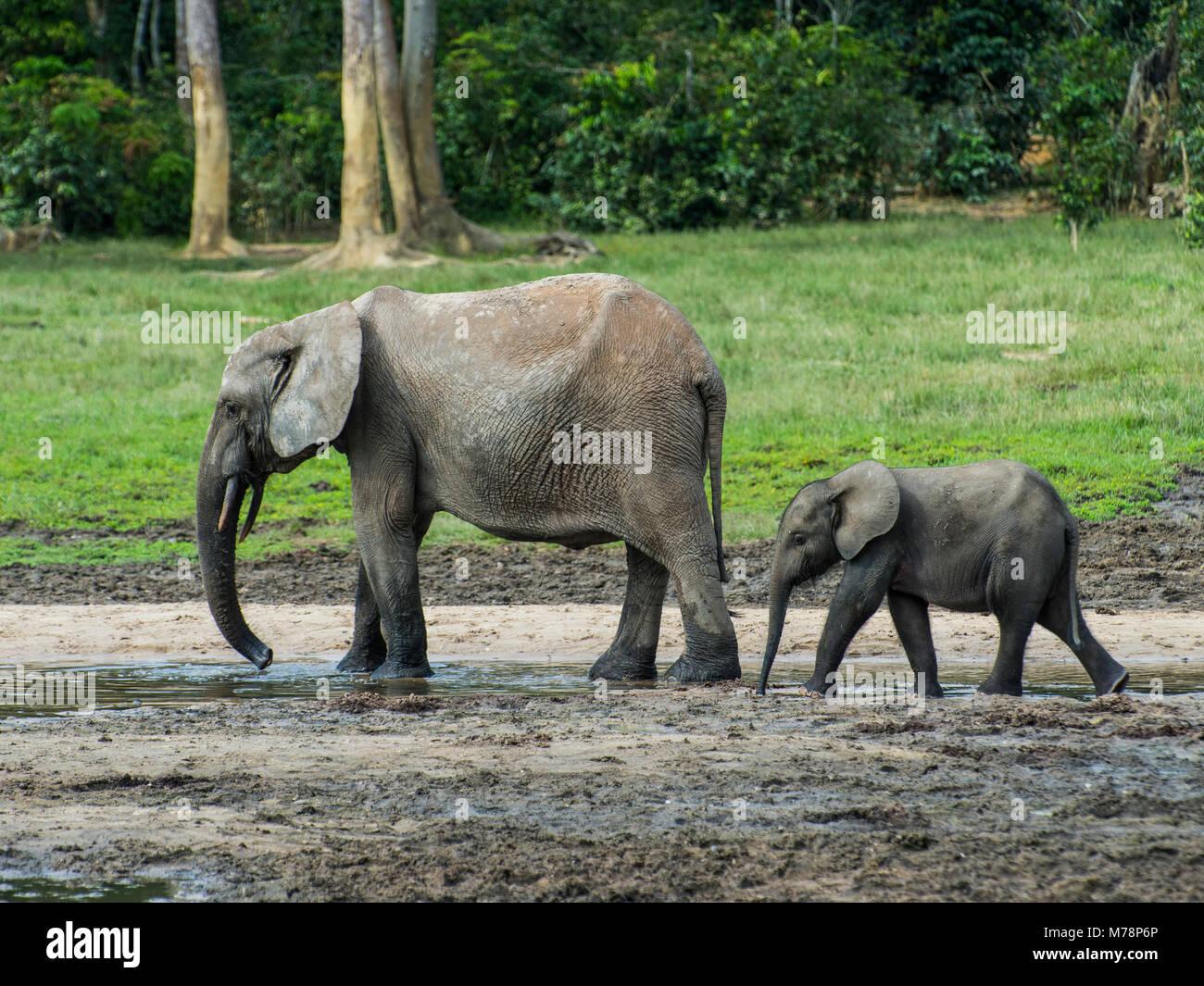 Young baby central african republic stock photos young for Designhotel elephant prague 1 czech republic