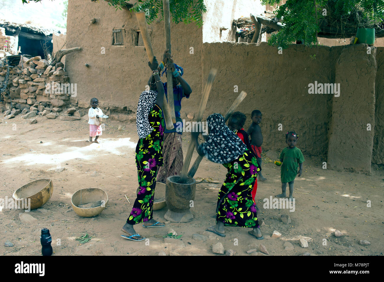 During the harvest season in Dogon communities every able bodied female pounds millet during the day. Mali, West - Stock Image