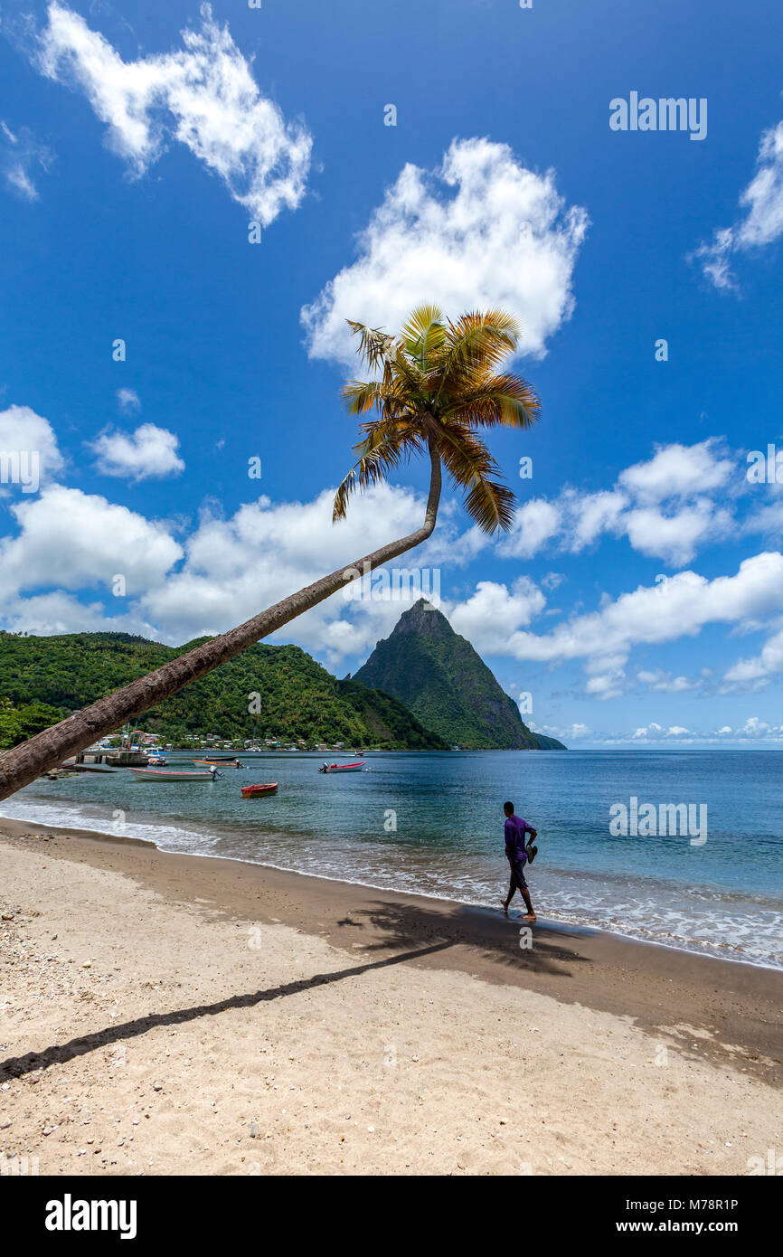Man walking under a lone palm on the beach at Soufriere with Petit Piton in the distance, St. Lucia, Windward Islands, - Stock Image