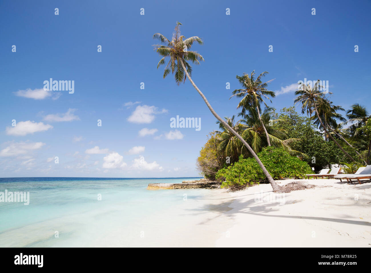 Palm trees lean over white sand, under a blue sky, on Bandos Island in The Maldives, Indian Ocean, Asia - Stock Image