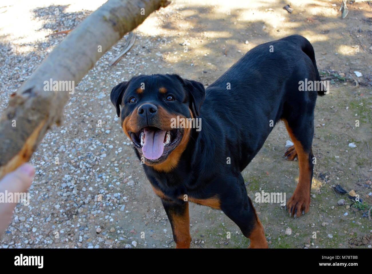 Big Puppy Stock Photos & Big Puppy Stock Images - Alamy