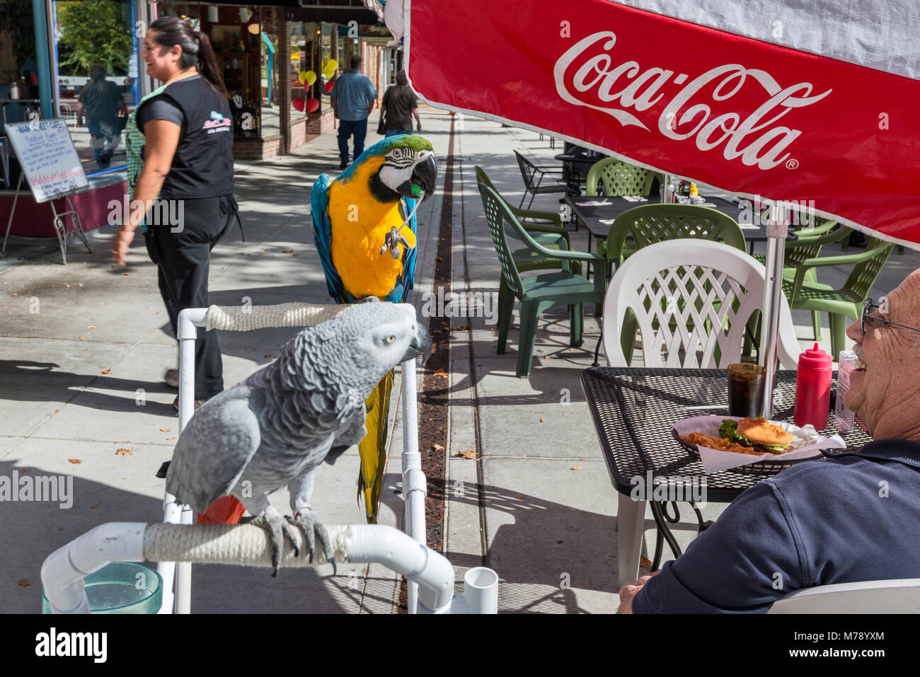Elderly customer with two parrots in sidewalk cafe at Main Street Mall in Grand Junction, Colorado, USA - Stock Image