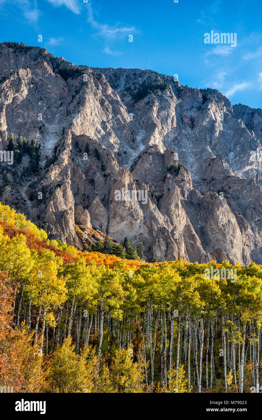 Marcellina Mountain, aspens in fall foliage, seen from West Elk Loop Scenic Byway, Gunnison National Forest, West - Stock Image