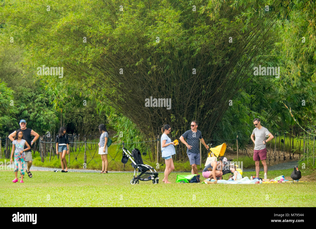 Young expat families picnicking in the Botanic Gardens, Singapore. Stock Photo
