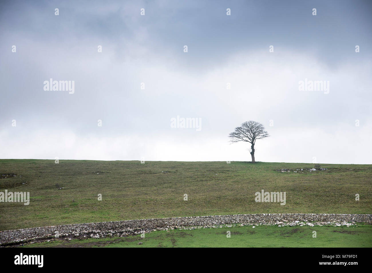 A lone tree on a hillside in the Derbyshire countryside. England UK - Stock Image