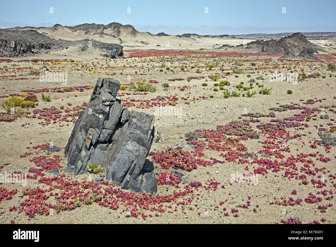 Africa, South-West Africa, Namibia, Erongo region, Dorob National Park, scenery, Namib, Namib desert, nature reserve, - Stock Image